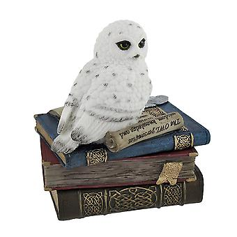 Wise Snow Owl Resting on Scholar`s Books Trinket Box
