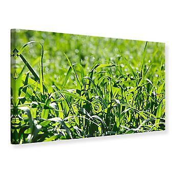 Lærred Print solrige græs