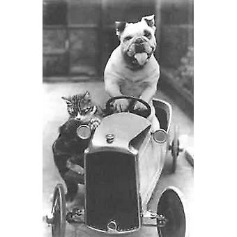 Va-Va-Vroom, Bully and his cat go racing  Greetings Card