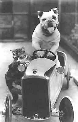 Va-Va-Vroom, Bully and his cat go racing! Greetings Card