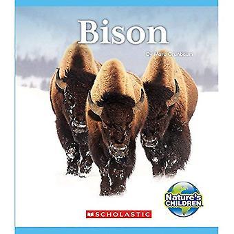 Bison (Kinder der Natur)