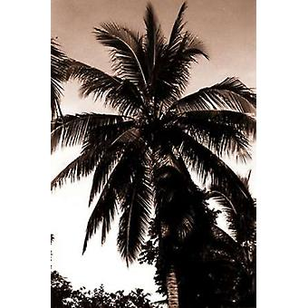 Coconut Palm Bali Poster Print by  Cyril Blue
