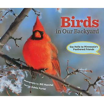 Birds in Our Backyard - Say Hello to Minnesota's Feathered Friends by