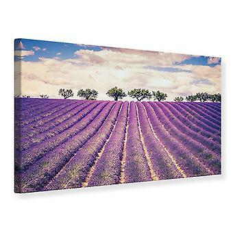 Canvas Print The Lavender Field