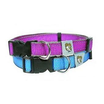 Doggy Things REFLECTIVE BLUE COLLAR (Dogs , Walking Accessories , Collars)