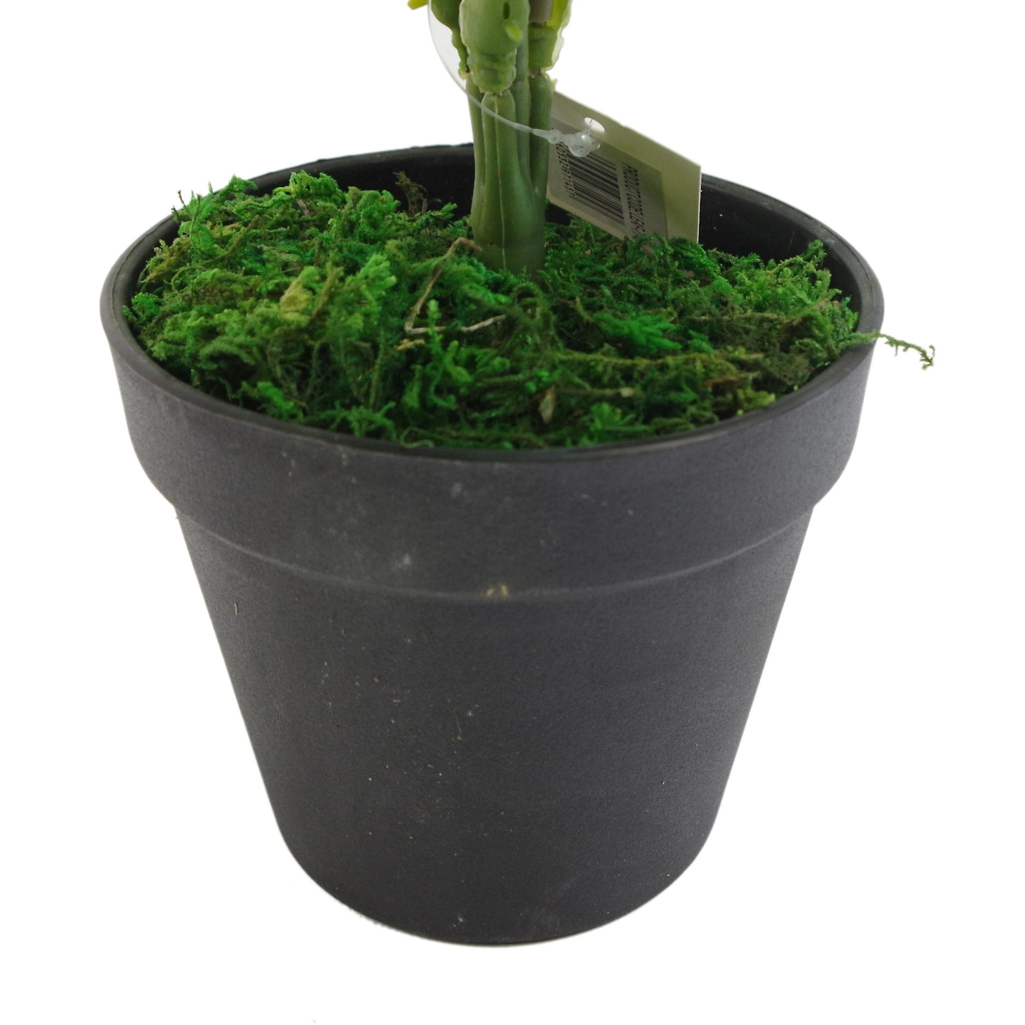 60cm Artificial Green Stripe Leaf Plant