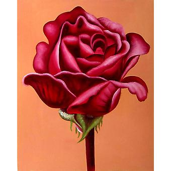 40x50cm, red rose