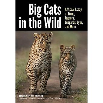 Big Cats In The Wild - A Visual Essay of Lions - Jaguars - Leopards -