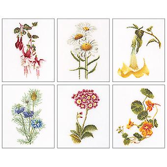 Floral Studies 4 On Aida Counted Cross Stitch Kit 6 3 4