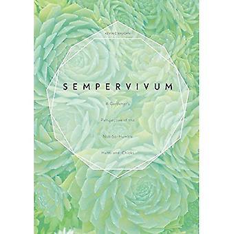 Sempervivum