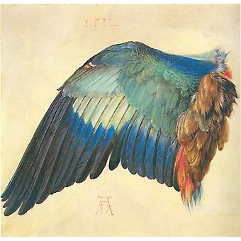 Wing of a Blue Roller,Albrecht Durer,50x48cm