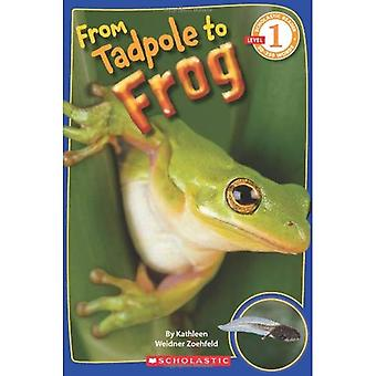 From Tadpole to Frog (Scholastic Reader - Level 1