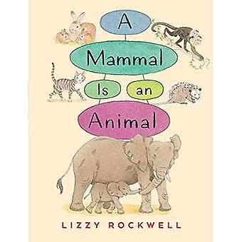 Un mammifero è un animale