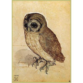 Albrecht Durer - The Little Owl Poster Print Giclee