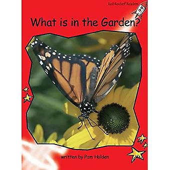 What's in the Garden?: Level 1: Early (Red Rocket Readers: Non-fiction Set A)