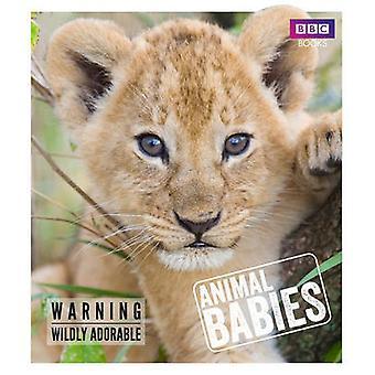 Animal Babies by Laura Barwick - 9781785941009 Book