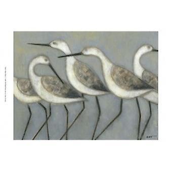 Shore fåglar jag affisch Skriv av Norman Wyatt (19 x 13)