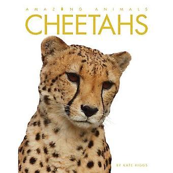 Cheetahs (Amazing Animals (Creative Education Paperback))