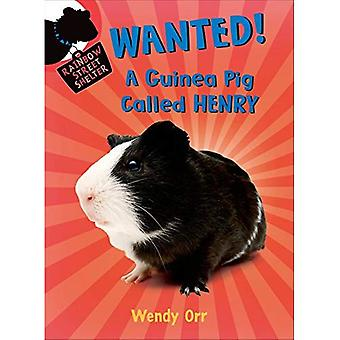 Wanted!: A Guinea Pig Called Henry (Rainbow Street Shelter (Quality))