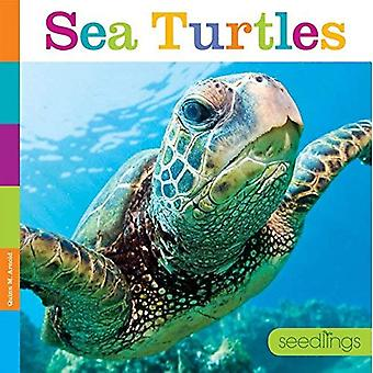 Sea Turtles (Seedlings)