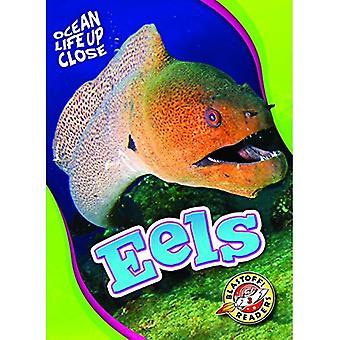 Eels (Ocean Life Up Close)