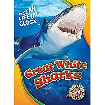 Great White Sharks (Ocean Life Up Close)