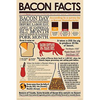 Poster - Bacon Facts 24