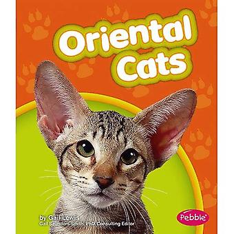Oriental Cats (Pebble Books: Cats)