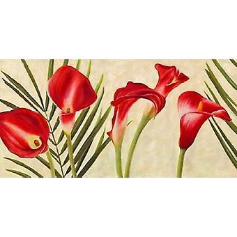 Impression affiche Callas rouge par Jenny Thomlinson