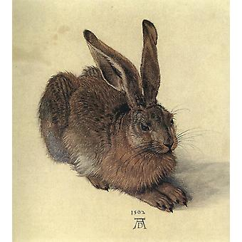 Albrecht Durer - Young Hare Poster Print Giclee