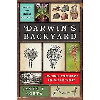 Arrière-cour de Darwin