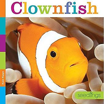 Semis: Poisson clown (semis)