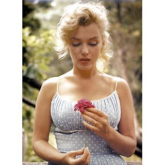 Marilyn Monroe kwiat Poster Print przez Sam Shaw (24 x 36)