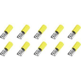 323008 receptáculo de hoja ancho conector: 6,3 mm conector espesor: 0,8 mm 180 ° parcialmente aislado amarillo 10 PC
