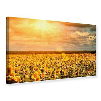Canvas Print gouden licht zonnebloem