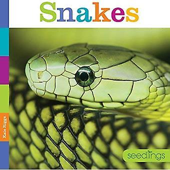 Snakes (Seedlings)