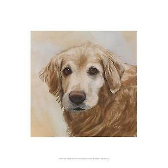 Chelsea Golden Retriever affisch Skriv av Edie Fagan (13 x 19)