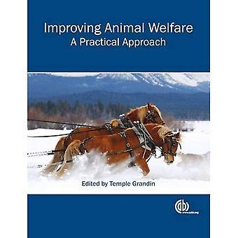 Att förbättra djurens välbefinnande: Ett praktiskt tillvägagångssätt