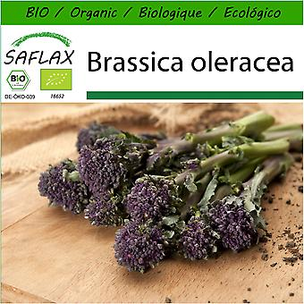 Saflax - 150 seeds - With soil - Organic - Broccoli - Early Purple - BIO - Brocoli - Early purple - BIO - Broccolo - Early Purple - Ecológico - Brócoli - Morado Temprano - Broccoli - Early Purple