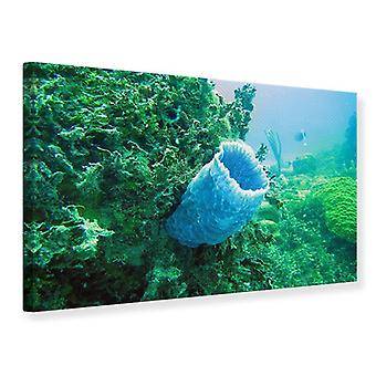Canvas Print Coral