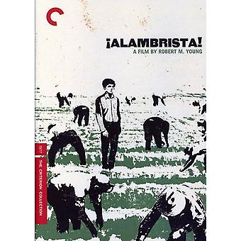 Alambrista [DVD] USA import