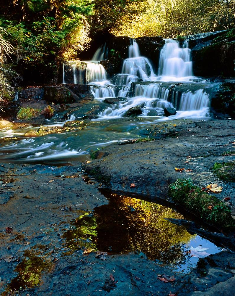 Scenic view of waterfall Alsea Falls South Fork Alsea River Benton County Central Coast Range Oregon USA Poster Print by Panoramic Images (28 x 22)