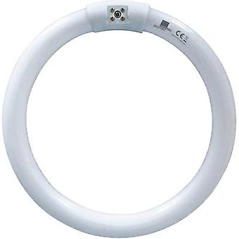 UV ring light Swissinno UVA 22W round TUBE_T6-22W Suitable for Swissinno UV IV22 fan fly trap 1 pc(s)