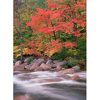Autumn along Swift River White Mountains National Forest New Hampshire Poster Print by Tim Fitzharris