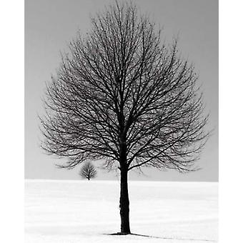 Winter Tree Poster Poster Print