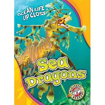 Sea Dragons by Heather Adamson - 9781626176447 Book