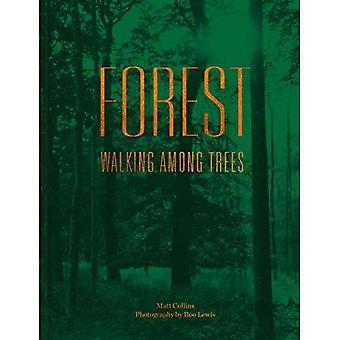 Wald: Wandern zwischen Bäumen