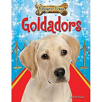 Goldadors (Designer Dogs)