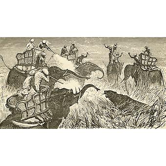 Hunters Mounted On Elephants During A Tiger Hunt In India In The 19Th Century From El Museo Popular Published Madrid 1889 PosterPrint