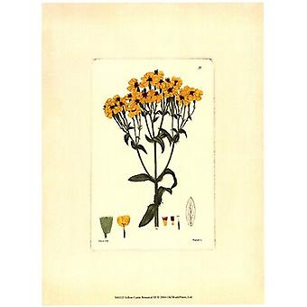 Yellow Curtis Botanical III Poster Print by Vision studio (10 x 13)